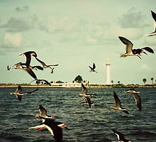 Lighthouse & Black Skimmers by Jonicool