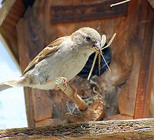 Momma Wren feeding her young by MrJohnny68
