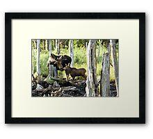 Bull Moose & Baby Moose Framed Print