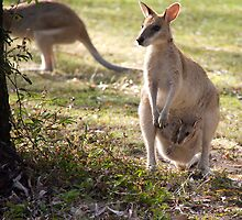 Wallaby with her Joey by AlexKokas