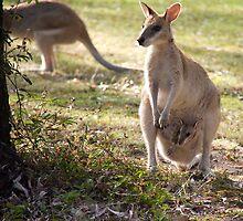 Wallaby with her Joey by AlexKokas