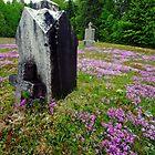 Rest in Pink by Stephen Beattie