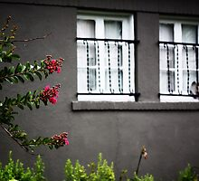 CRAPE MYRTLE OUTSIDE THE WINDOWS by Pauline Evans