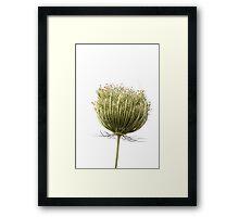Wild flora XI 5459 Framed Print