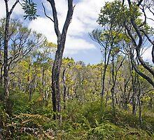 WAIPOUA FOREST by LARA KAY