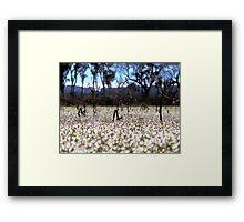 Frost - Dangars Lagoon, Northern Tablelands, NSW, Australia Framed Print