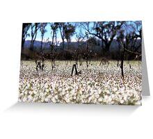 Frost - Dangars Lagoon, Northern Tablelands, NSW, Australia Greeting Card