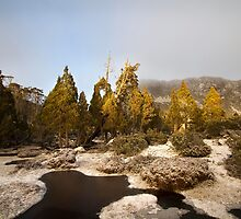 Pines at Pool of Bethesda by Mike Calder
