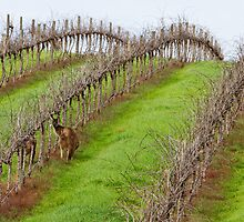Everybody Loves South Australian Wines... by KathyT