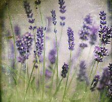 Stress Free by Lynn Benson