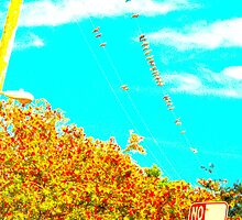 birds on a wire in color by shannonybaloney
