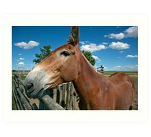 Mule From 1880 Town Art Print