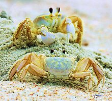 Ghost Crabs by Paulette1021