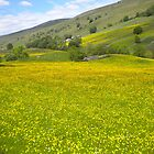 Buttercups in Langstrothdale, Upper Wharfededale by Margaret Brown