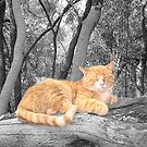 Uno's taking a nap... (Ginger Cat , Nothern West, South Africa) by Qnita