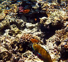 Red Sea by leigh miller