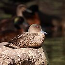 Chesnut Teal (female) by mosaicavenues
