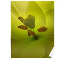 Flower in a Flower Poster