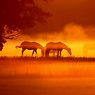 Horses in the fog 2 by DutchLumix
