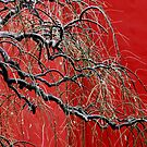 Chinese tree in winter. by Jean-Luc Rollier