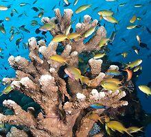 Coral Head by Bob  Whorton