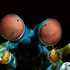 Mantis eyes by Bob  Whorton