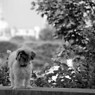 Dog on the street #11 by Jean-Luc Rollier