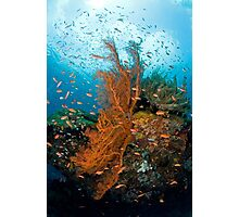 Seafan community Photographic Print