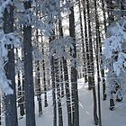 snowtrees by slipdavies