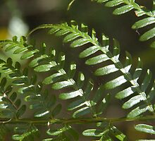 Fern branch, Nanup, South West WA by BigAndRed