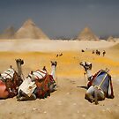 Giza Pyramids with Camels by InterfaceImages