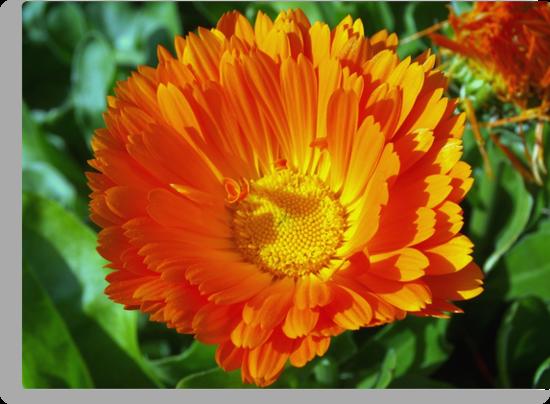 Orange lover's special by ?? B. Randi Bailey