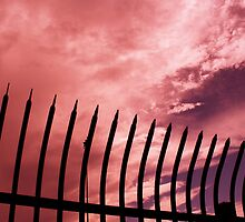 Thorns Against a Rosy Sky by Dr. Charles Taylor