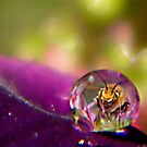 Bee Drop by Shelly Harris