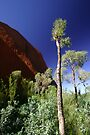 trees and red rock by Tam  Locke