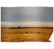 Paint Horse in Autumn Poster