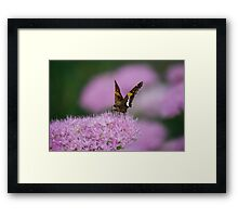 Butterfly on Autumn Sedum Framed Print