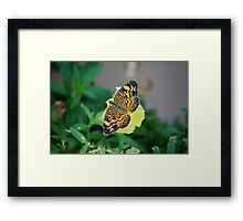 Butterfly on Snapdragon Framed Print