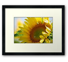 Kansas Sunflower Framed Print