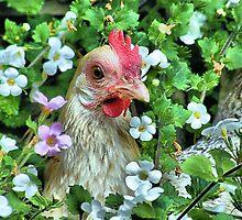 Little hen by jeanniechris