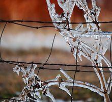 Ice on Weed by Suz Garten