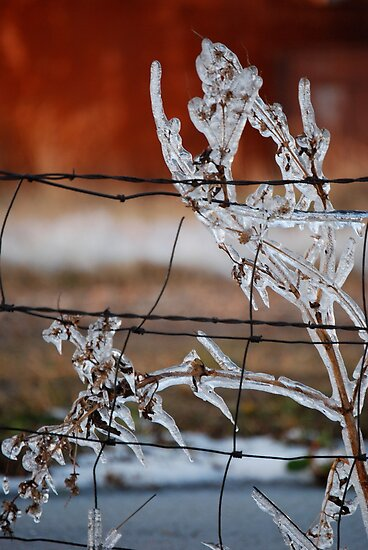 Ice on Weed by Suz Garten