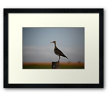 Upland Sandpiper in Kansas Framed Print