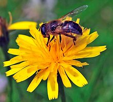 Bee On Flower 0032 by mike1242