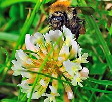 Bee On Flower 0035 by mike1242