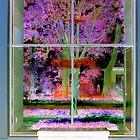 Window View by David Schroeder