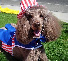 Yankee Doodle Poodle by Steve Hunter
