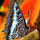 Tanzania Butterfly by Colleen Rohrbaugh