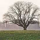 The Lone Oak 2 by Deri Dority