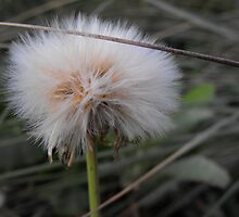 Crying Dandelion by Mark Krznaric